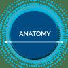 Anatomy Alderon